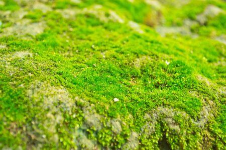 Moss on Waterfall, Thailand Stock Photo