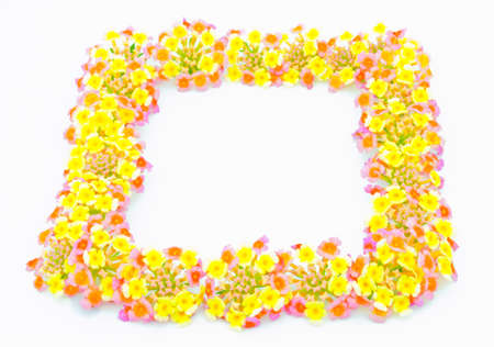 The flowers frame a white background  Stock Photo