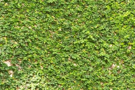 green walls: Green wall