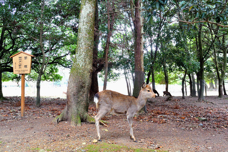 non smoking: standing deer in garden with trees and pond and non smoking sign in japanese and english Stock Photo