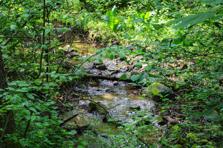 water in a green and beutiful forest with plants and tree
