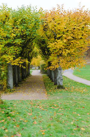 gunnebo: the garden at Gunnebo castle in sweden the tree i beutiful