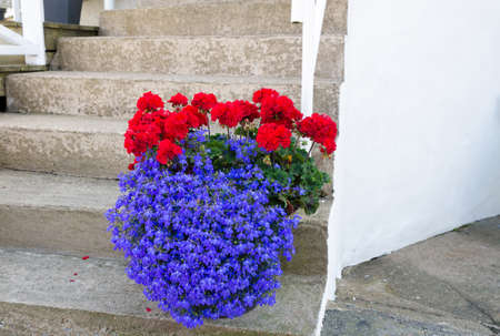 Beutiful flower on the stair in to the house
