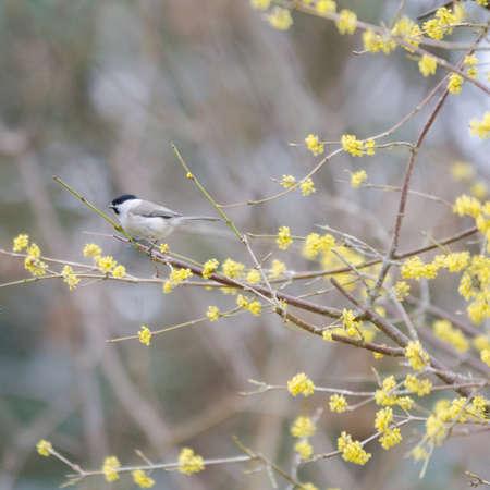 one small bird marsh tit sit in the tree Stock Photo