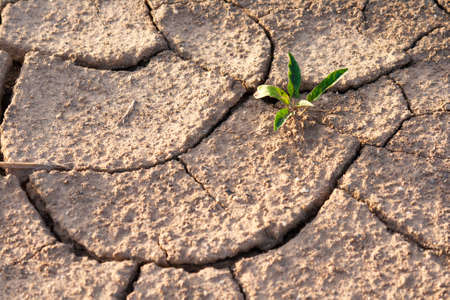 A plants try to growing in arid area photo