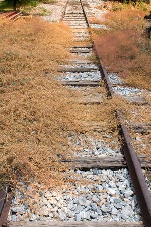 wasteful: wasteful railway with dry plant that tried to growing above railway Stock Photo