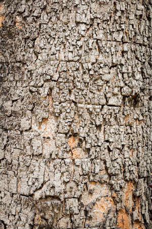 bark background texture: abstract tree bark, background texture