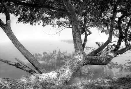 green landscape: tree beside the water, black and white