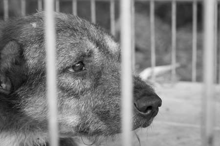 imprison: pity old dog imprison in steel cage, black and white color Stock Photo