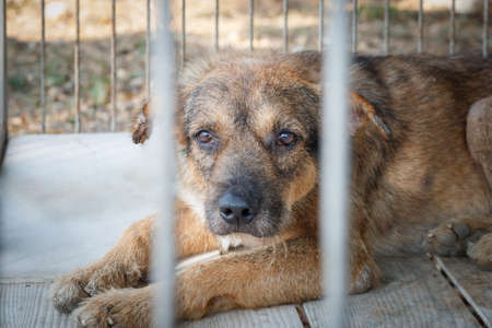 animal shelter: pity old dog imprison in steel cage