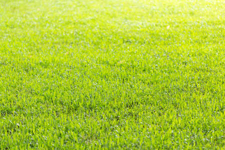 field of green grass , abstract background, selective focus Stock Photo