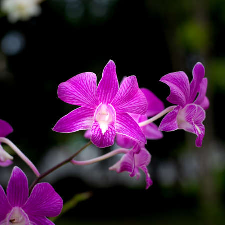 purple orchid with dark background, selective focus