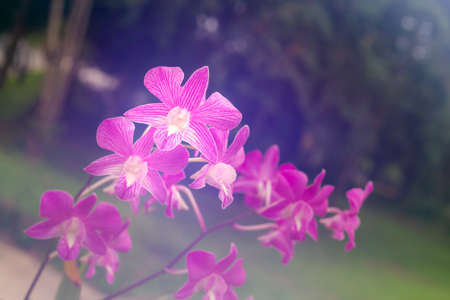 purple orchid with glow background, selective focus