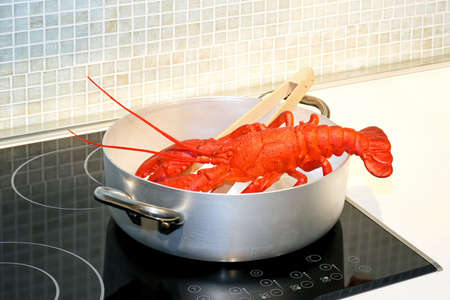 lobster pot: Red lobster steaming in pot on hob