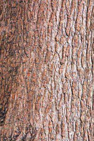 cortex: Background of tree cortex rough surface texture