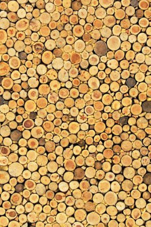 woodpile: Big wall background made from log wood