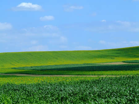 Big green field with blue sky Stock Photo - 458903