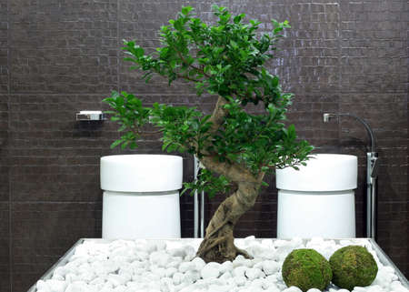 Japanese style bathroom with bonsai tree and stones photo