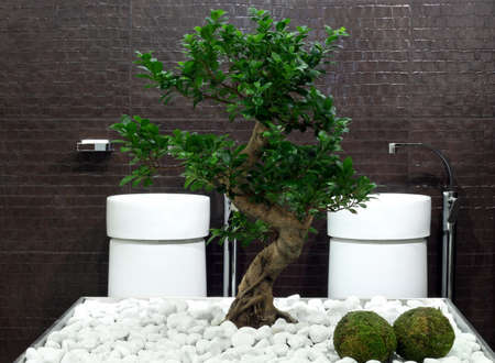 Japanese style bathroom with bonsai tree and stones