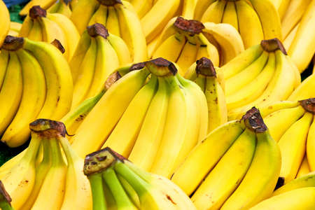 Bunch of fresh tropical yellow bananas fruit Stock Photo - 3482609