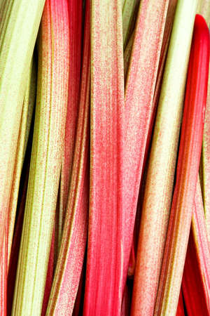 rhubarb: Fresh and organic vegetable plant rhubarb chard