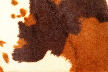 cow hide: Cow hide pattern background in brown tone