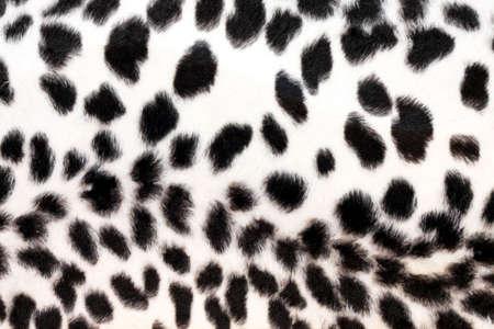 Wild African animal hide pattern white leopard