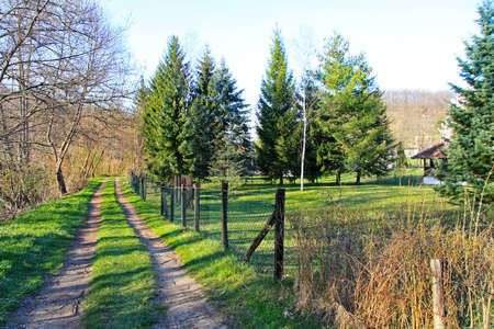 Village road path way with green grass photo