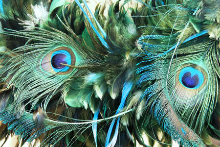 Beautiful natural decorative pattern of peacock feather