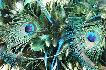 piuma di pavone: Bella naturali decorativi modello di penna di pavone