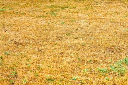 Conceptual shot of drought savanna style grass Stok Fotoğraf