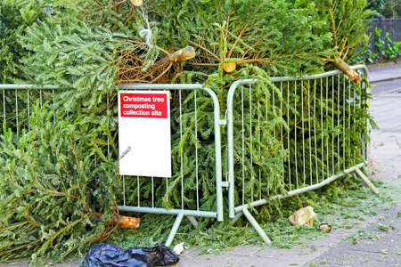 composting: Collection site for composting old Christmas tree