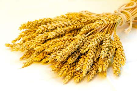 Cierre de tiro de haz de trigo fresco