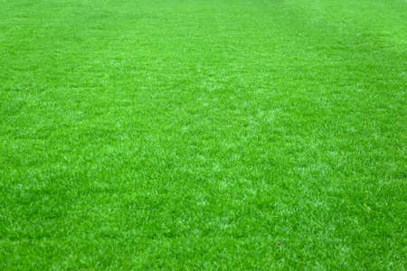 trimmed: Trimmed green lawn at football sport stadium Stock Photo