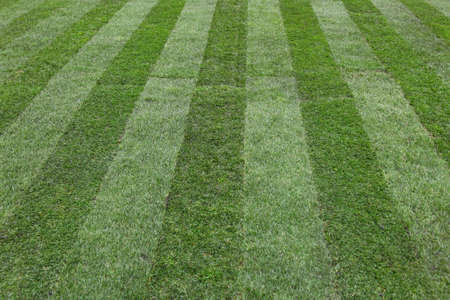 freshly: Freshly mowed lawn with two color grass