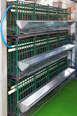 Chicken cages for laying eggs at farm photo