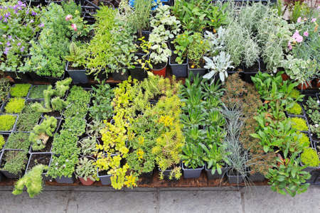 Decorative green plants and seedlings nursery garden photo