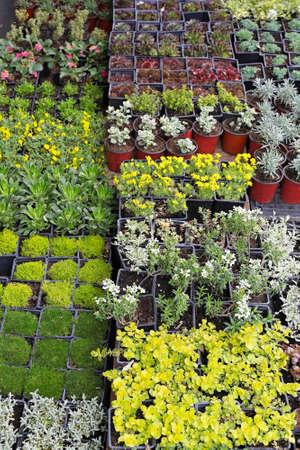 plant nursery: Decorative green plants and seedlings nursery garden