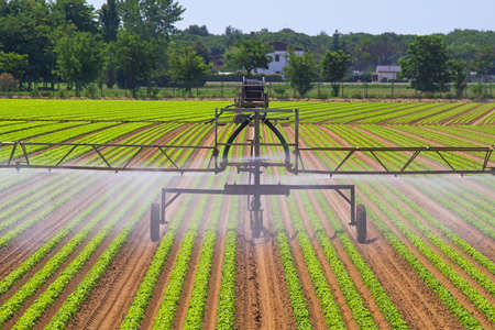 Green agriculture field with water irrigation system