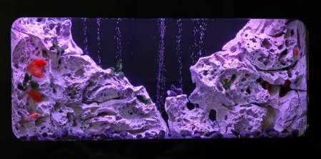 vivarium: Large fish tank with tropical fish inside Stock Photo