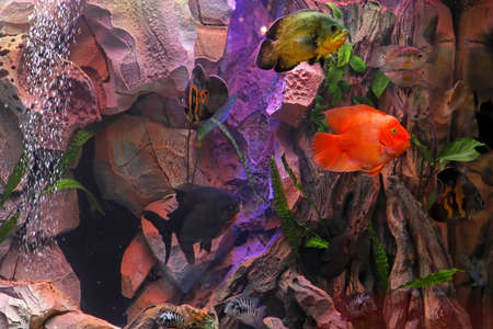 Tropical reef inside large aquarium with colorful fish Stock Photo - 15390897