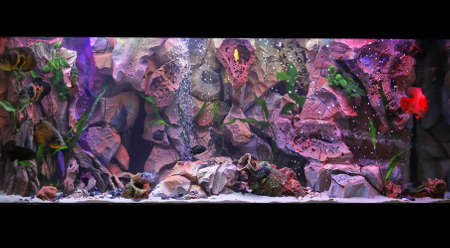 vivarium: Large fish tank with tropical coral reef inside
