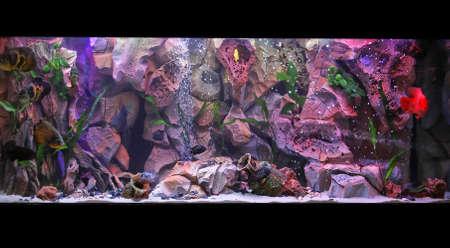 vivarium: Large fish tank with tropical coral reef inside