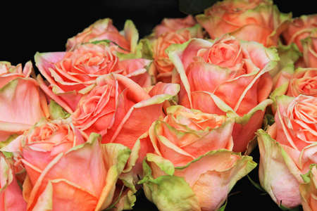 Boquet of vintage pink roses in full bloom Stock Photo - 16127036
