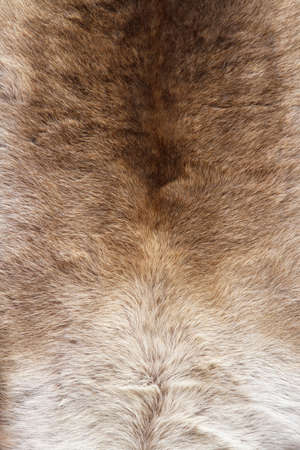 Close up shot of animal fur material Stock Photo - 16331588