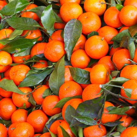 Big bunch of honey tangerines with leaves Stock Photo - 16686513