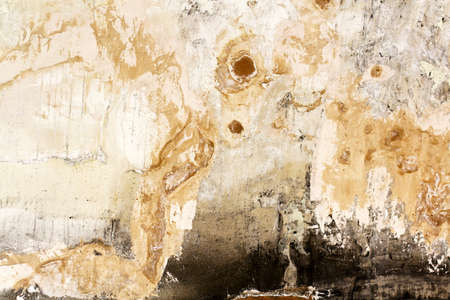 bad condition: Bad condition of wall with distincive fungus and mold