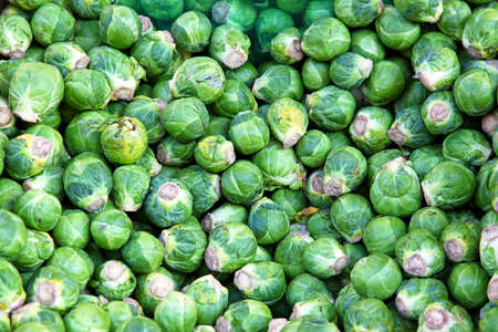 Big bunch of green Brussel sprout vegetables Stock Photo - 17048717
