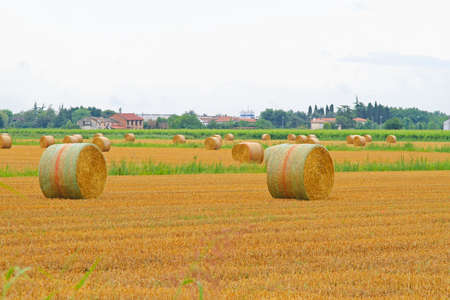 Rolling haystacks in the yellow agriculture field Stock Photo - 17094482