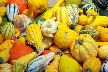 Big assortment of decorative small pumpkins Stock Photo - 17123481
